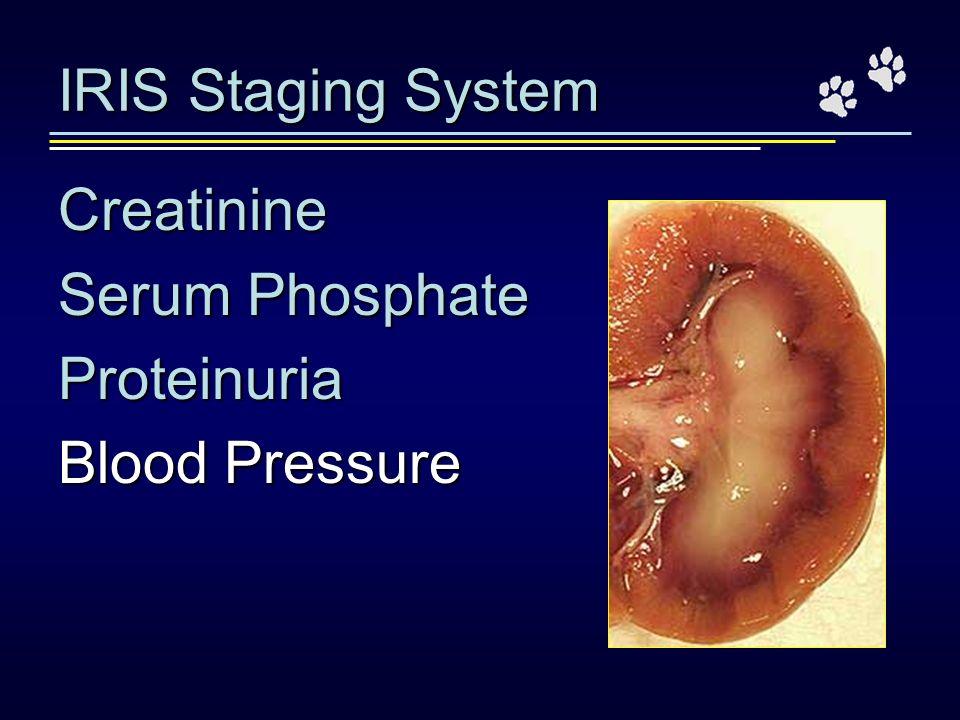 IRIS Staging System Creatinine Serum Phosphate Proteinuria Blood Pressure