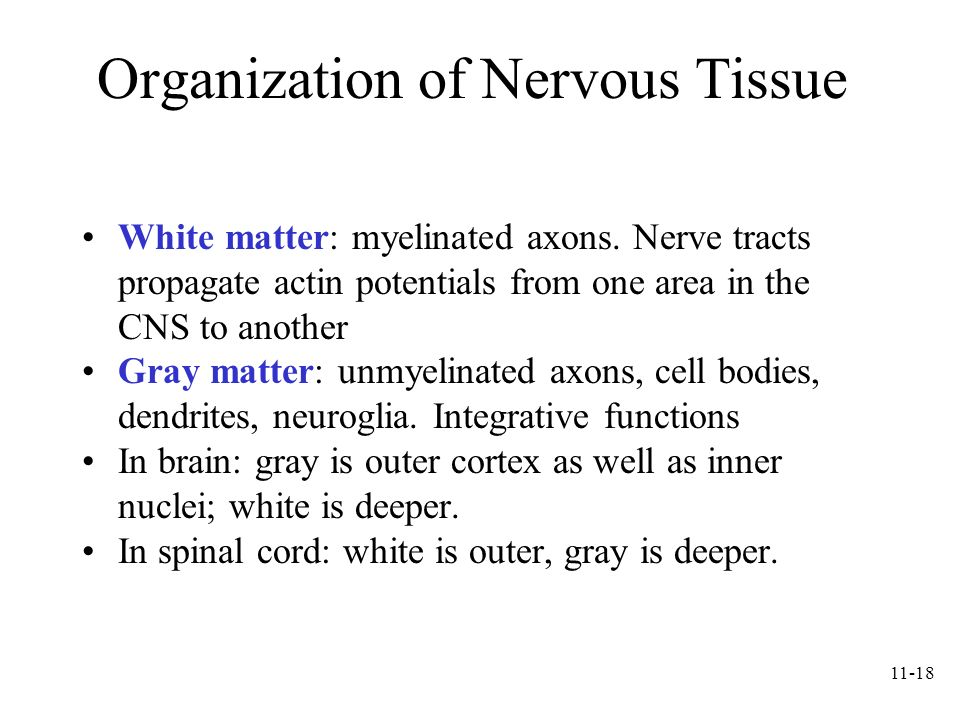 11-18 Organization of Nervous Tissue White matter: myelinated axons. Nerve tracts propagate actin potentials from one area in the CNS to another Gray