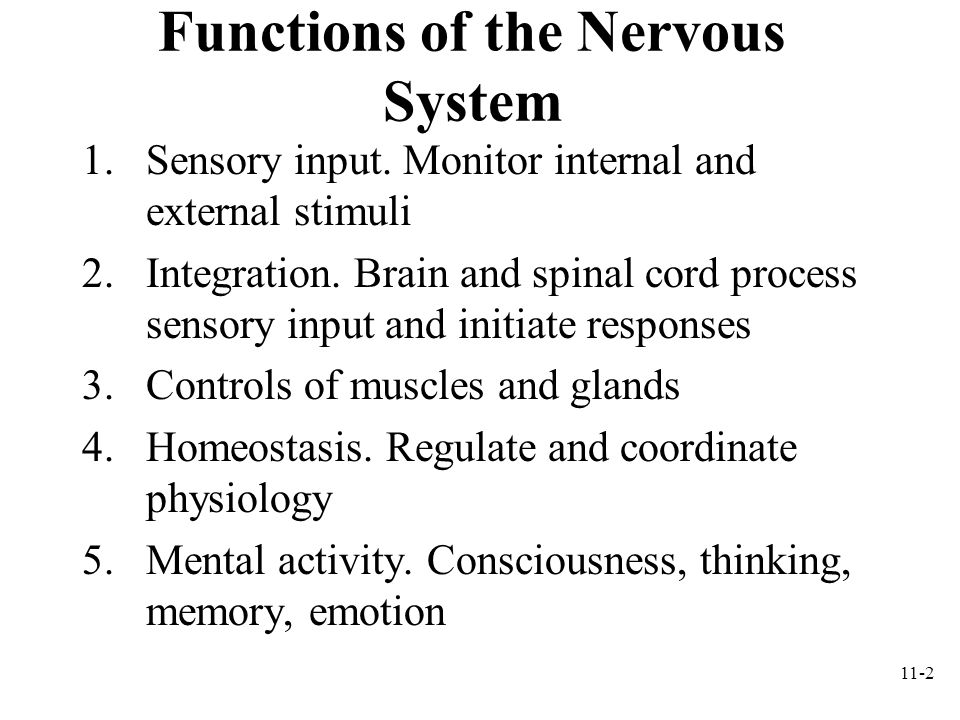 11-3 The Nervous System Components –Brain, spinal cord, nerves, sensory receptors Subdivisions –Central nervous system (CNS): brain and spinal cord –Peripheral nervous system (PNS): sensory receptors and nerves