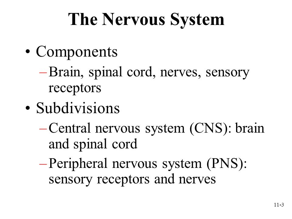 11-4 PNS Sensory receptors: ending of neurons or separate, specialized cells that detect such things as temperature, pain, touch, pressure, light, sound, odors Nerve: a bundle of axons and their sheaths that connects CNS to sensory receptors, muscles, and glands –Cranial nerves: originate from the brain; 12 pairs –Spinal nerves: originate from spinal cord; 31 pairs Ganglion: collection of neuron cell bodies outside CNS Plexus: extensive network of axons, and sometimes neuron cell bodies, located outside CNS