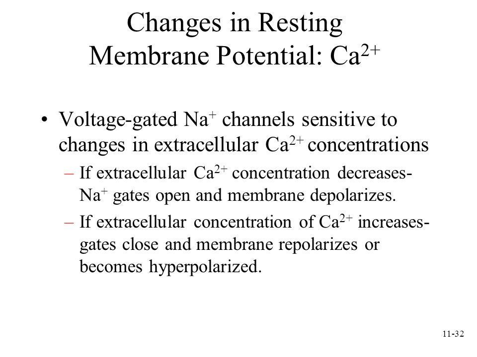 11-32 Changes in Resting Membrane Potential: Ca 2+ Voltage-gated Na + channels sensitive to changes in extracellular Ca 2+ concentrations –If extracel