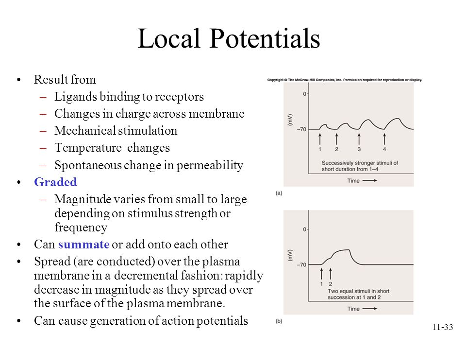 11-33 Local Potentials Result from –Ligands binding to receptors –Changes in charge across membrane –Mechanical stimulation –Temperature changes –Spon