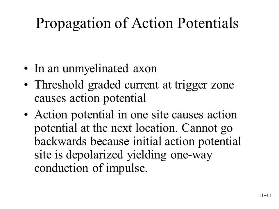 11-41 Propagation of Action Potentials In an unmyelinated axon Threshold graded current at trigger zone causes action potential Action potential in on
