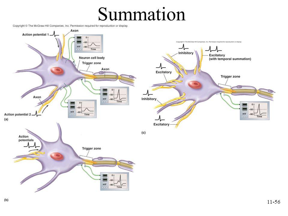 11-56 Summation