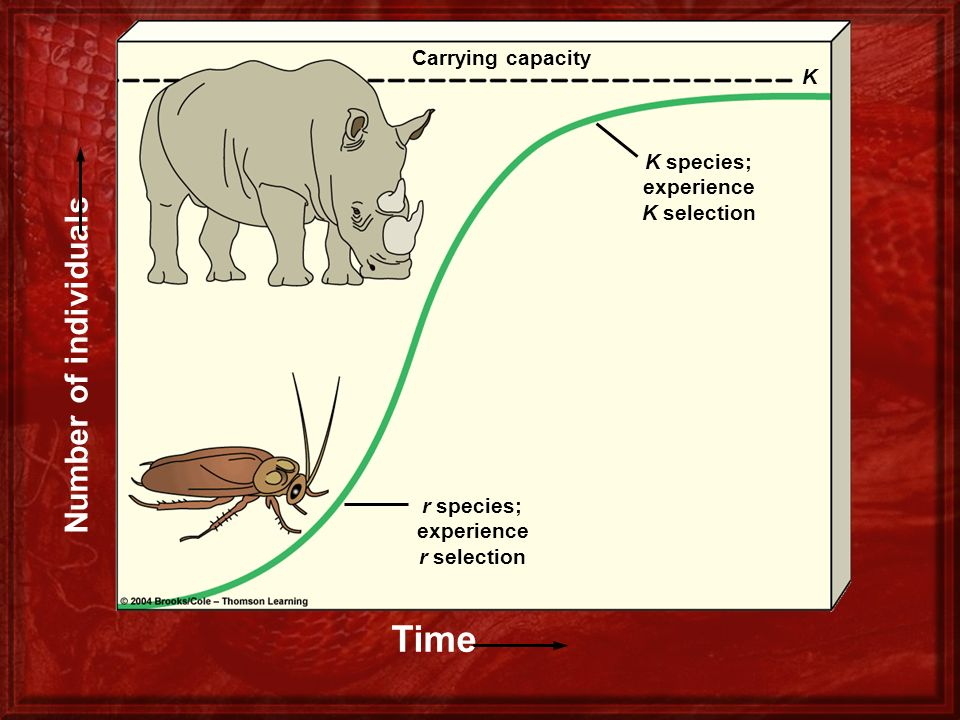 Figure 9-9 Page 196 Number of individuals Time Carrying capacity K species; experience K selection r species; experience r selection K