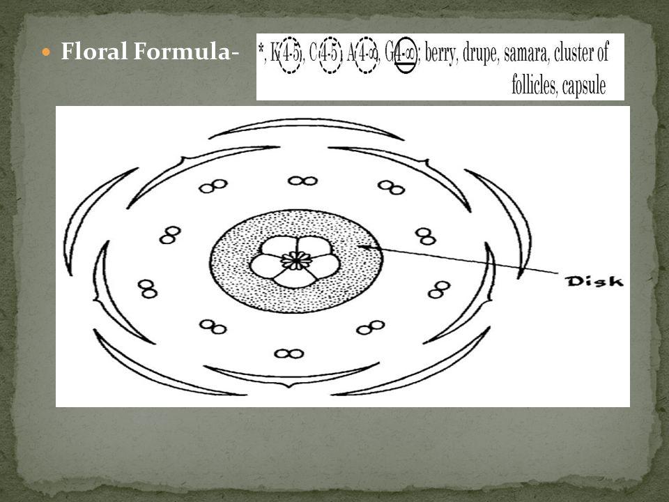 Floral Formula-