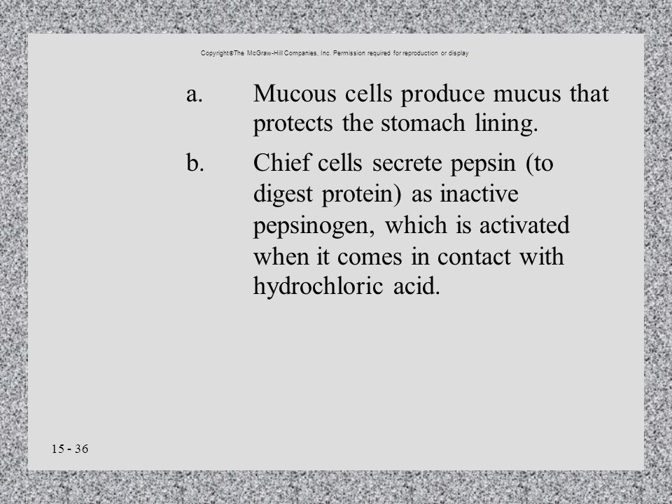 15 - 36 a.Mucous cells produce mucus that protects the stomach lining. b.Chief cells secrete pepsin (to digest protein) as inactive pepsinogen, which