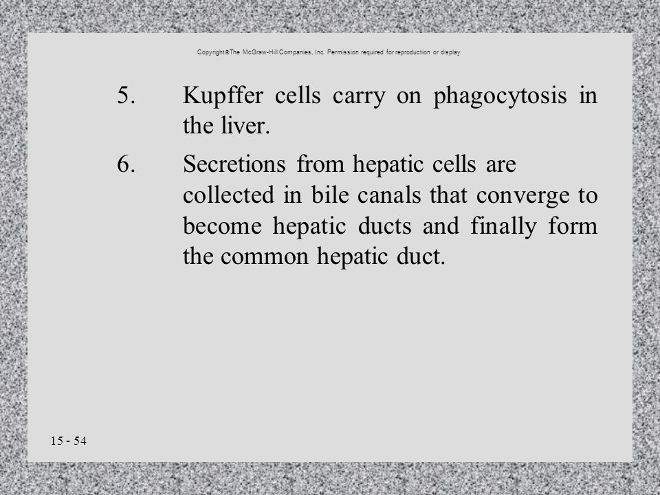 15 - 54 5.Kupffer cells carry on phagocytosis in the liver. 6.Secretions from hepatic cells are collected in bile canals that converge to become hepat
