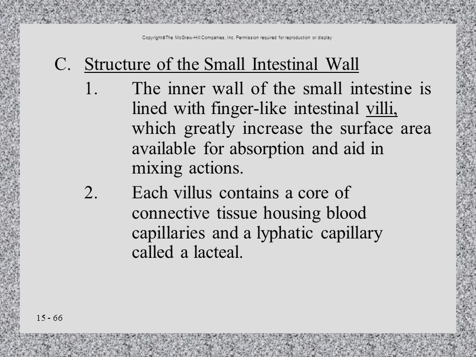 15 - 66 C.Structure of the Small Intestinal Wall 1.The inner wall of the small intestine is lined with finger-like intestinal villi, which greatly inc