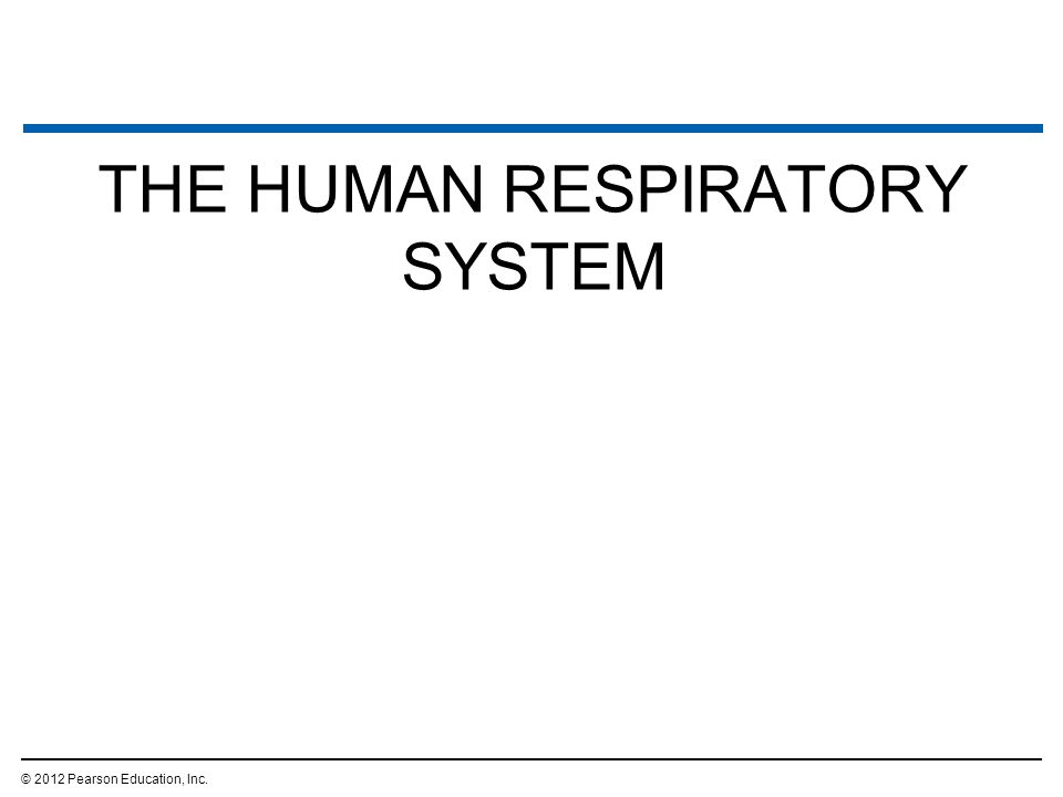 THE HUMAN RESPIRATORY SYSTEM © 2012 Pearson Education, Inc.