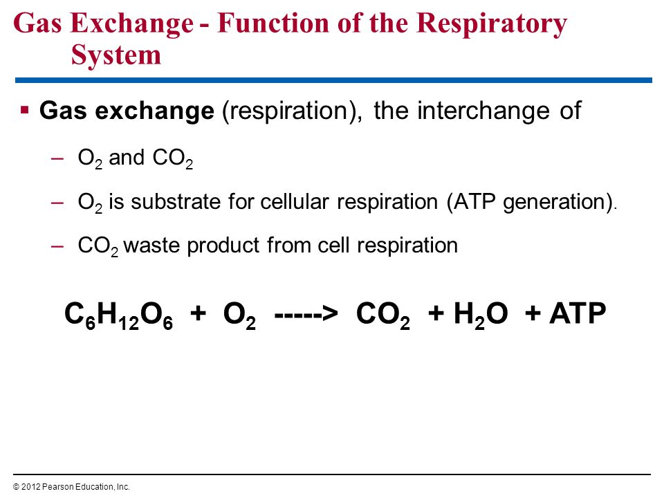 Gas Exchange - Function of the Respiratory System Gas exchange (respiration), the interchange of –O 2 and CO 2 –O 2 is substrate for cellular respirat