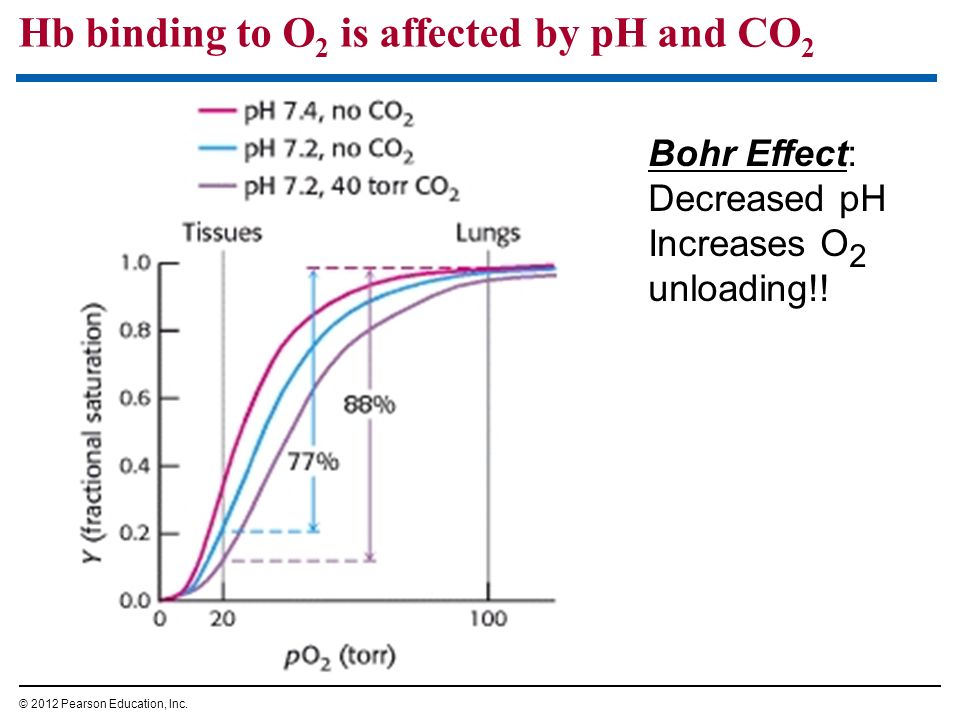 Hb binding to O 2 is affected by pH and CO 2 © 2012 Pearson Education, Inc. Bohr Effect: Decreased pH Increases O 2 unloading!!
