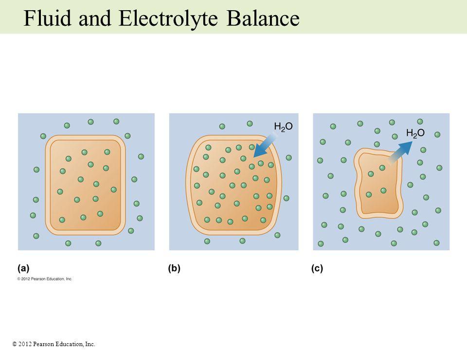 © 2012 Pearson Education, Inc. Fluid and Electrolyte Balance