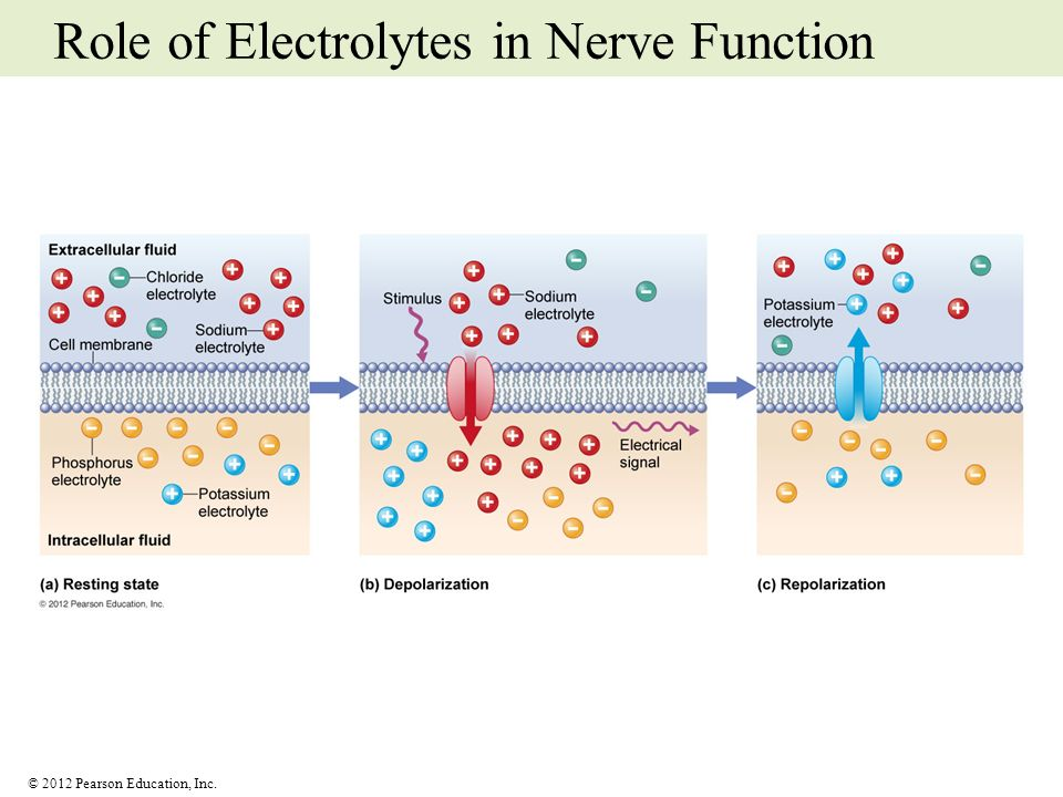 © 2012 Pearson Education, Inc. Role of Electrolytes in Nerve Function
