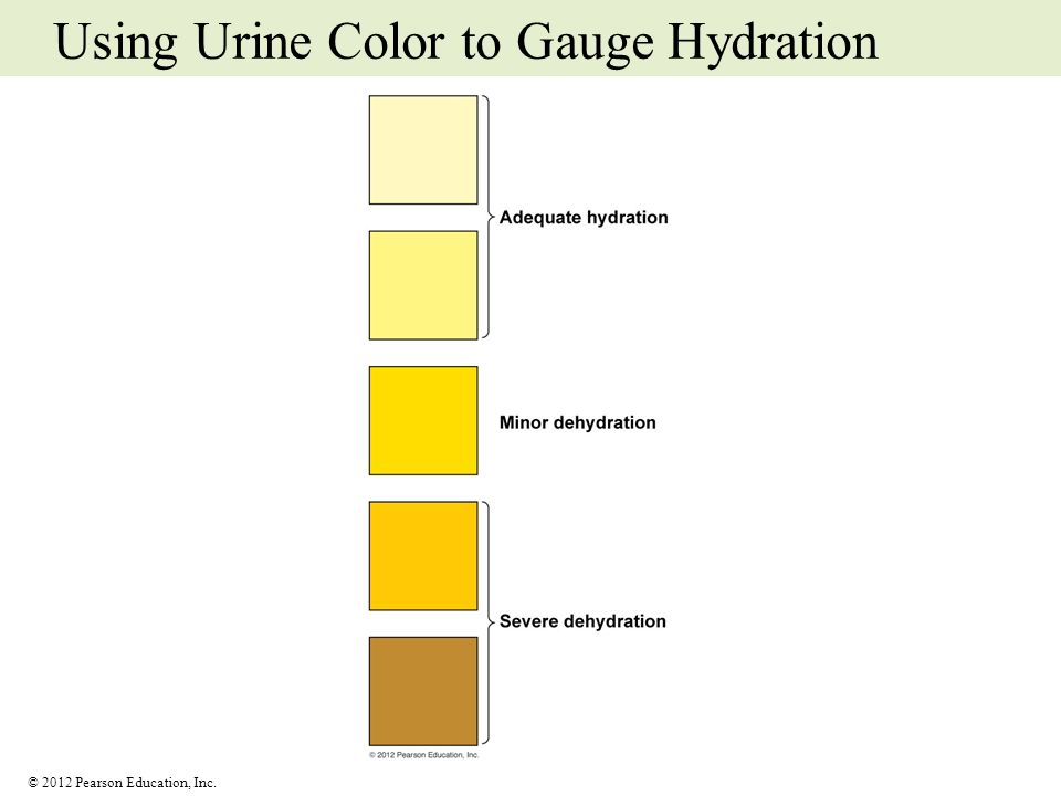 © 2012 Pearson Education, Inc. Using Urine Color to Gauge Hydration