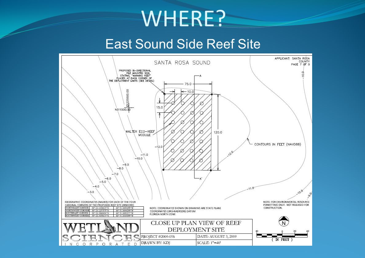 WHERE? East Sound Side Reef Site