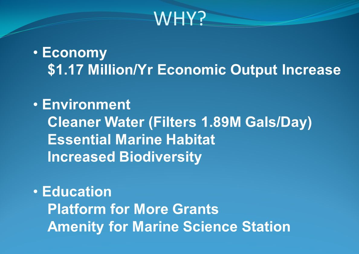 WHY? Economy $1.17 Million/Yr Economic Output Increase Environment Cleaner Water (Filters 1.89M Gals/Day) Essential Marine Habitat Increased Biodivers
