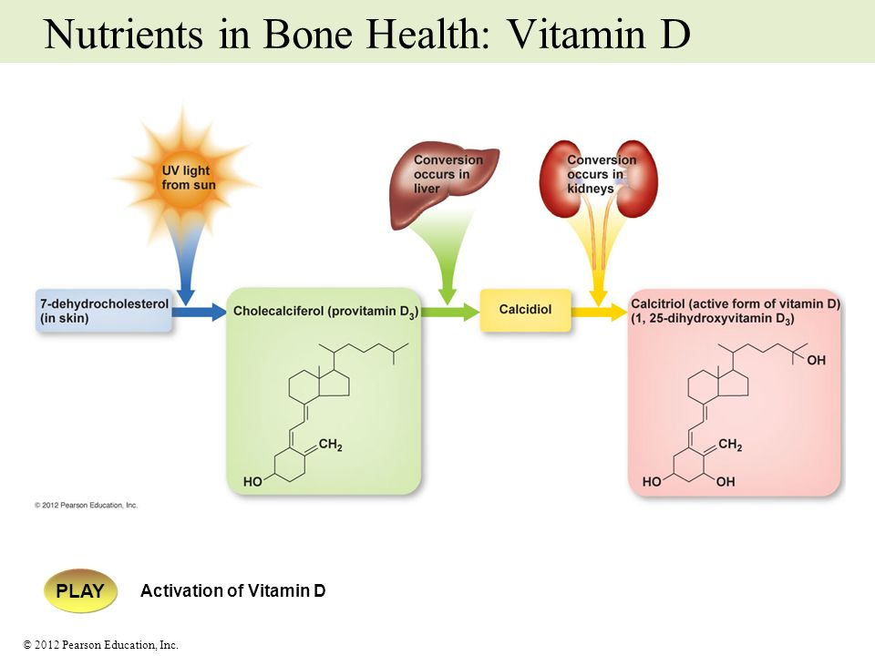 © 2012 Pearson Education, Inc. Nutrients in Bone Health: Vitamin D PLAY Activation of Vitamin D