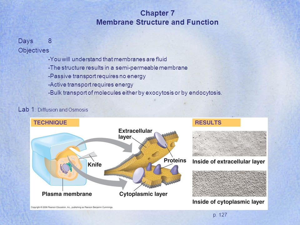 Chapter 7 Membrane Structure and Function Days8 Objectives -You will understand that membranes are fluid -The structure results in a semi-permeable me