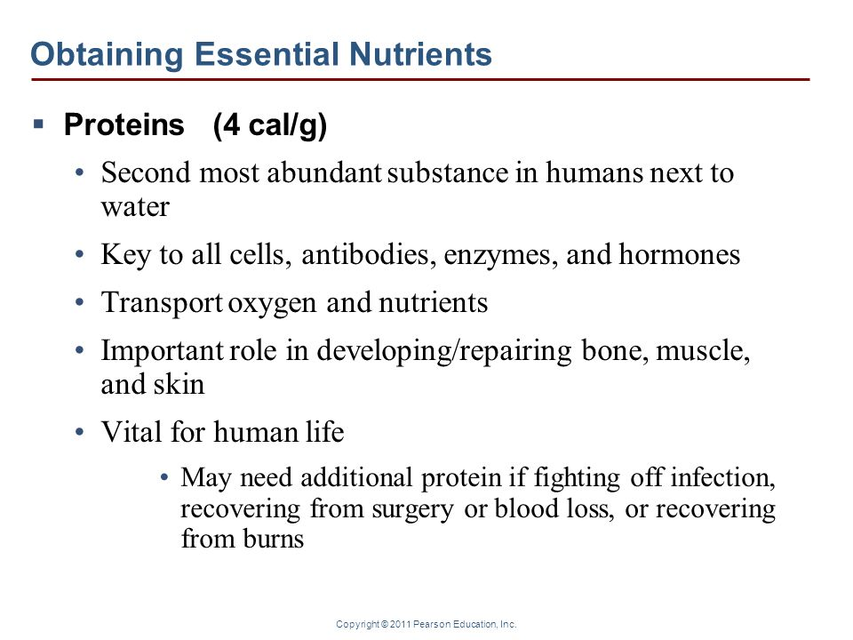 Copyright © 2011 Pearson Education, Inc. Obtaining Essential Nutrients Proteins (4 cal/g) Second most abundant substance in humans next to water Key t