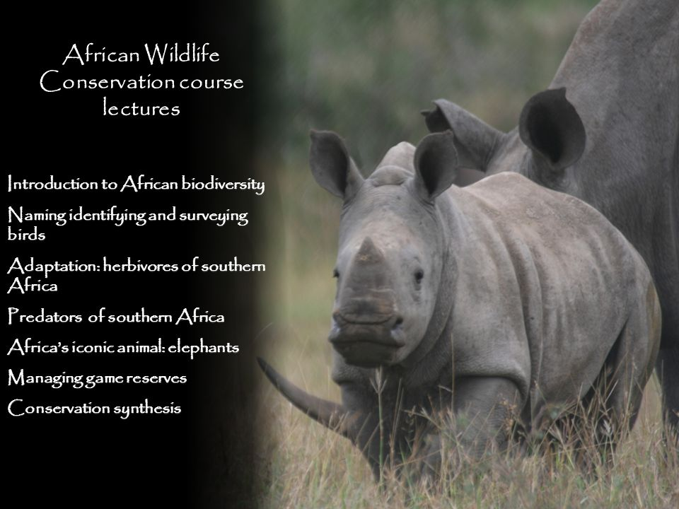 African Wildlife Conservation course lectures Introduction to African biodiversity Naming identifying and surveying birds Adaptation: herbivores of southern Africa Predators of southern Africa Africas iconic animal: elephants Managing game reserves Conservation synthesis