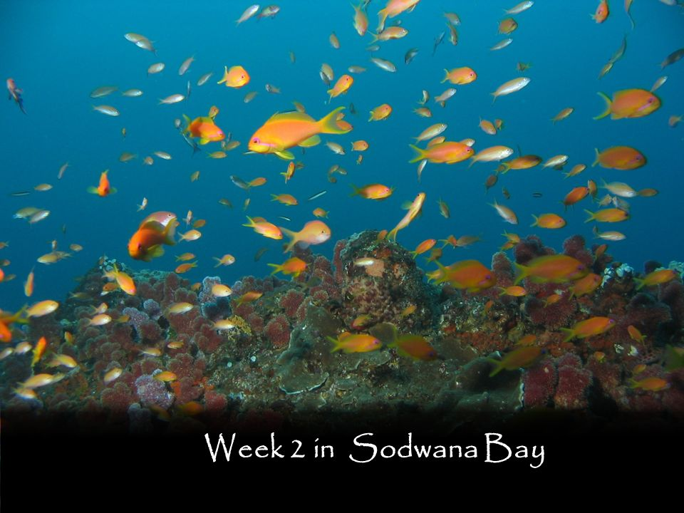 Week 2 in Sodwana Bay