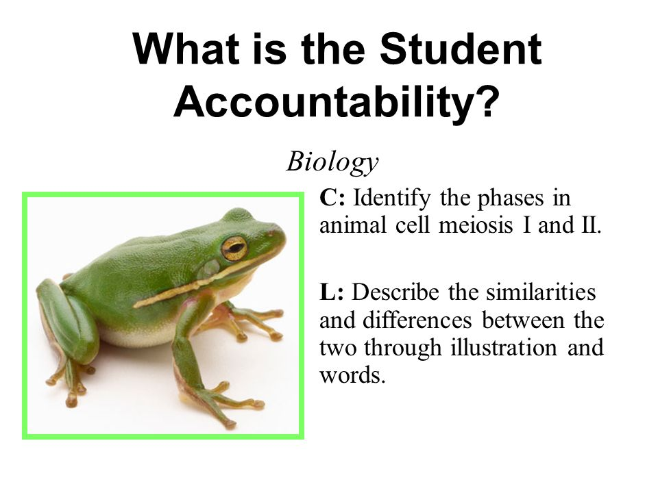 What is the Student Accountability? Biology C: Identify the phases in animal cell meiosis I and II. L: Describe the similarities and differences betwe