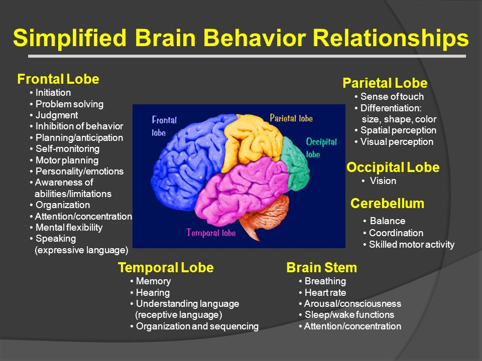 Simplified Brain Behavior Relationships Parietal Lobe Sense of touch Differentiation: size, shape, color Spatial perception Visual perception Occipita