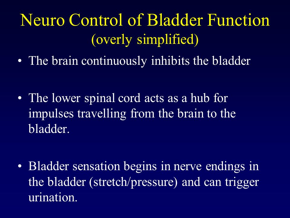 Neuro Control of Bladder Function (overly simplified) The brain continuously inhibits the bladder The lower spinal cord acts as a hub for impulses tra
