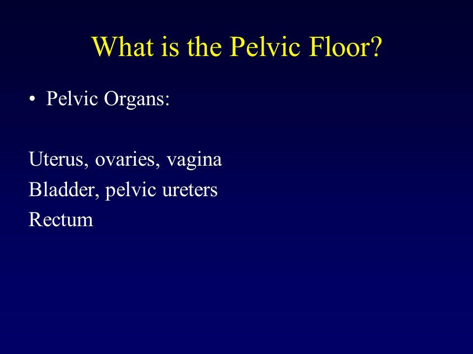 What is the Pelvic Floor? Pelvic Organs: Uterus, ovaries, vagina Bladder, pelvic ureters Rectum