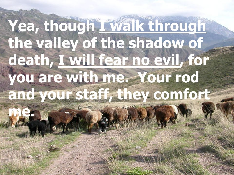 Yea, though I walk through the valley of the shadow of death, I will fear no evil, for you are with me. Your rod and your staff, they comfort me.