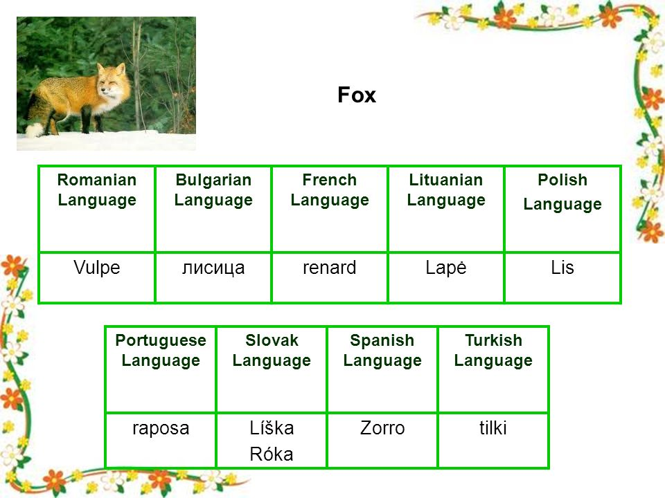 Romanian Language Bulgarian Language French Language Lituanian Language Polish Language VulpeлисицаrenardLapėLis Portuguese Language Slovak Language Spanish Language Turkish Language raposaLíška Róka Zorrotilki Fox
