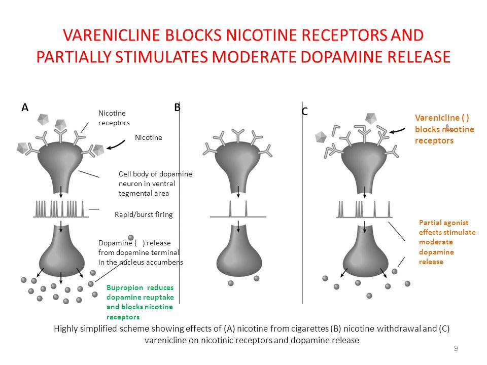VARENICLINE BLOCKS NICOTINE RECEPTORS AND PARTIALLY STIMULATES MODERATE DOPAMINE RELEASE 9 Varenicline ( ) blocks nicotine receptors Partial agonist e