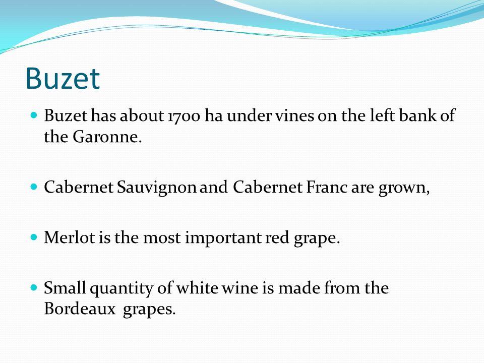 Buzet Buzet has about 1700 ha under vines on the left bank of the Garonne.