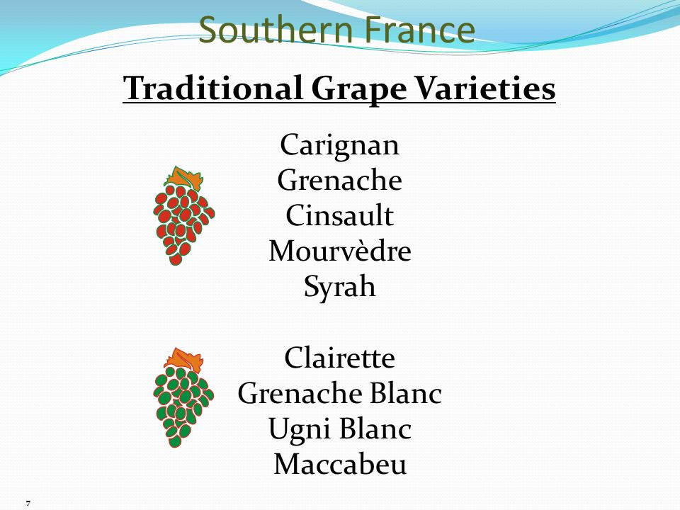 7 Traditional Grape Varieties Carignan Grenache Cinsault Mourvèdre Syrah Clairette Grenache Blanc Ugni Blanc Maccabeu Southern France