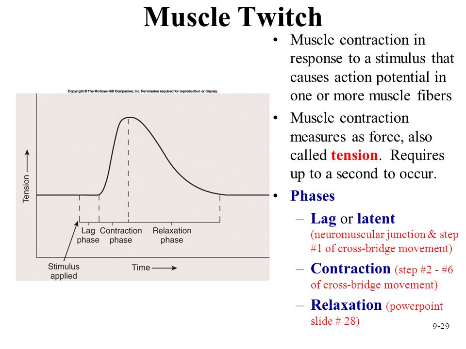 9-29 Muscle Twitch Muscle contraction in response to a stimulus that causes action potential in one or more muscle fibers Muscle contraction measures