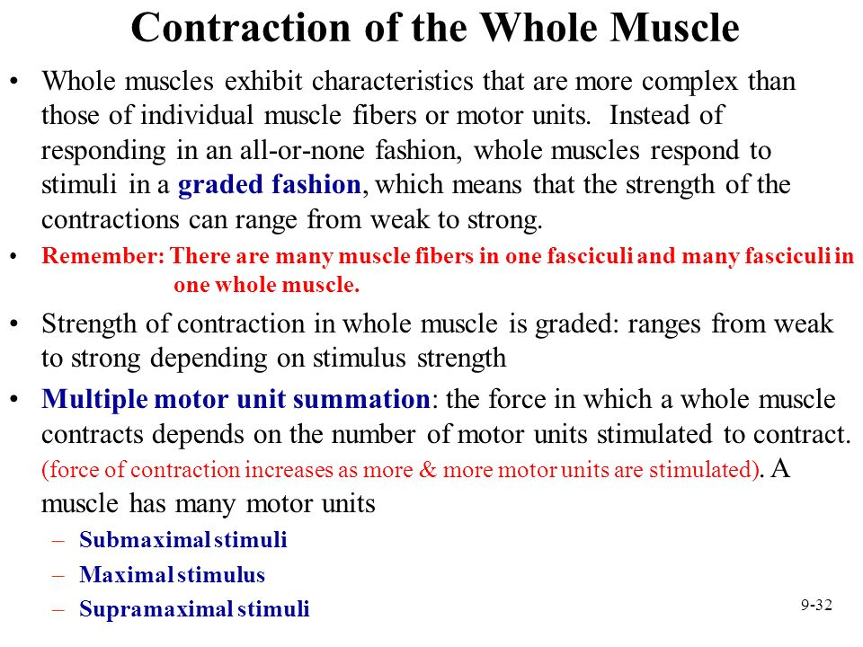 9-32 Contraction of the Whole Muscle Whole muscles exhibit characteristics that are more complex than those of individual muscle fibers or motor units