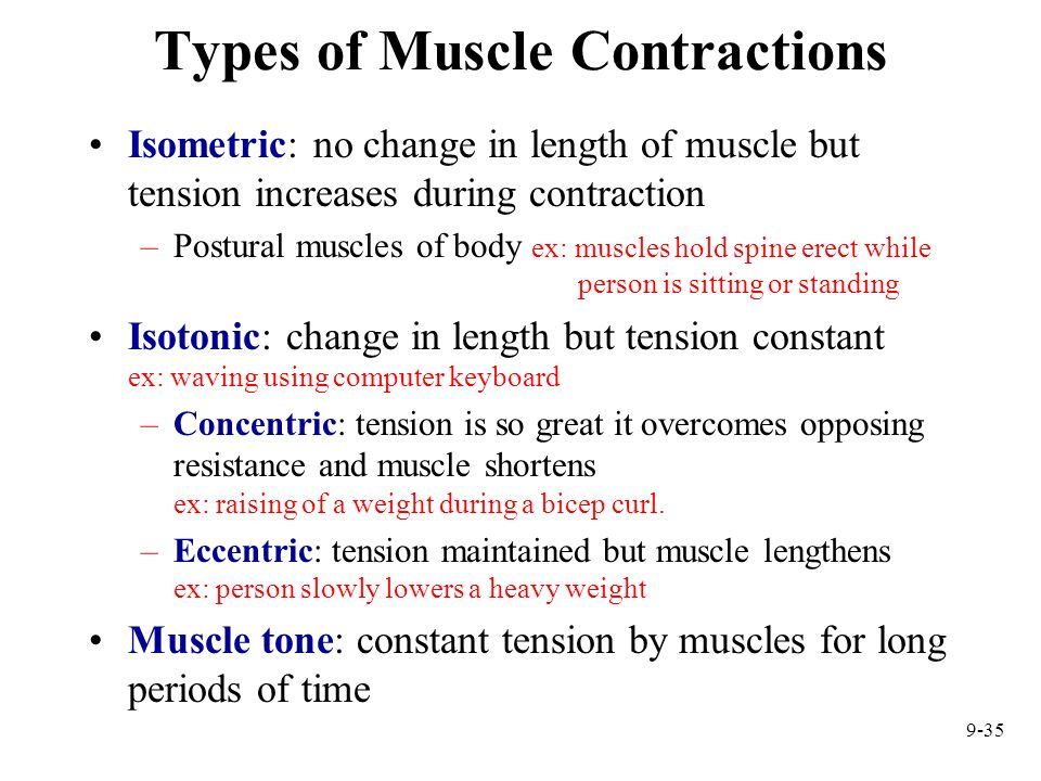 9-35 Types of Muscle Contractions Isometric: no change in length of muscle but tension increases during contraction –Postural muscles of body ex: musc