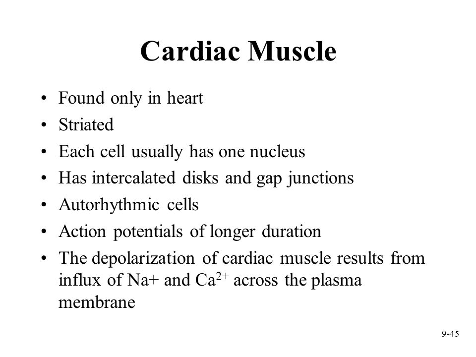 9-45 Cardiac Muscle Found only in heart Striated Each cell usually has one nucleus Has intercalated disks and gap junctions Autorhythmic cells Action