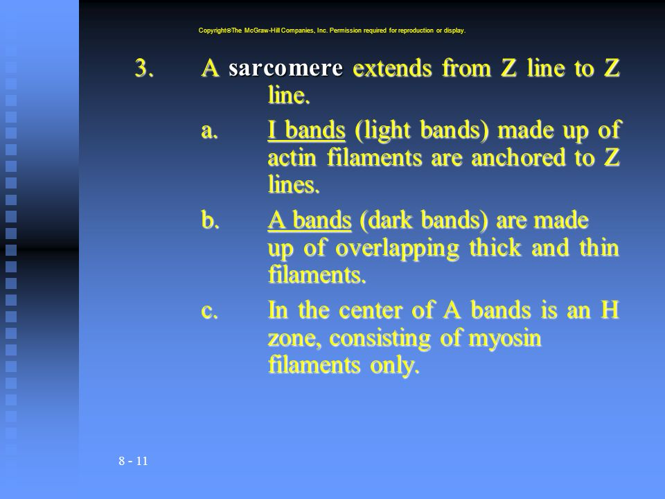 8 - 11 3.A sarcomere extends from Z line to Z line. a.I bands (light bands) made up of actin filaments are anchored to Z lines. b.A bands (dark bands)
