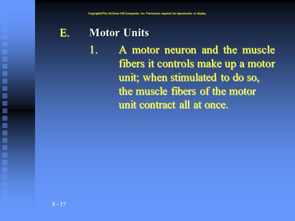 8 - 17 E.Motor Units 1.A motor neuron and the muscle fibers it controls make up a motor unit; when stimulated to do so, the muscle fibers of the motor unit contract all at once.