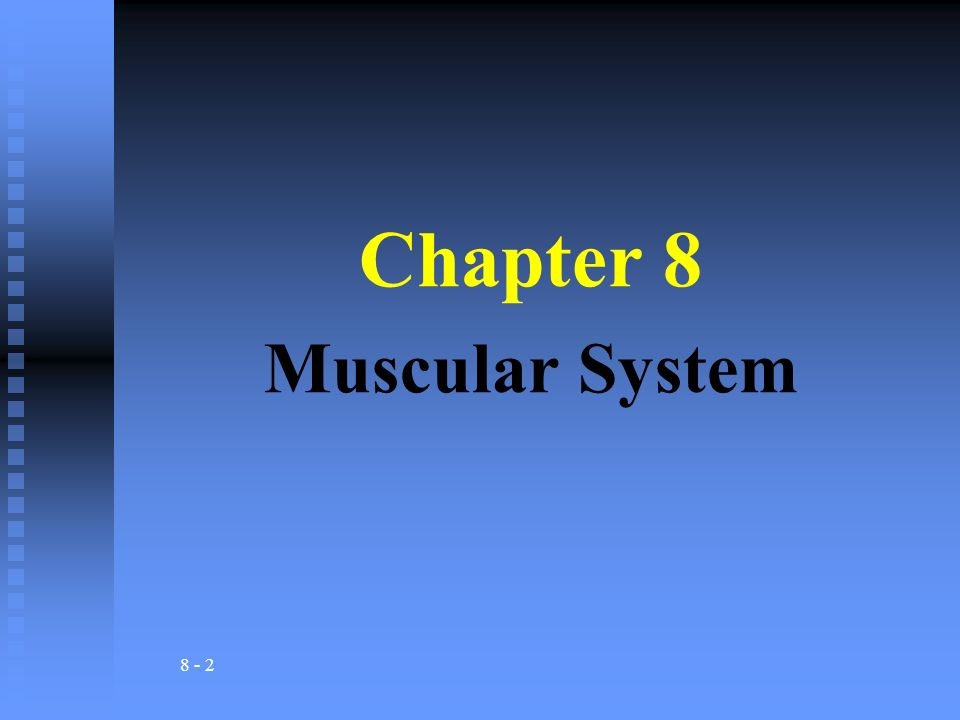 8 - 2 Chapter 8 Muscular System