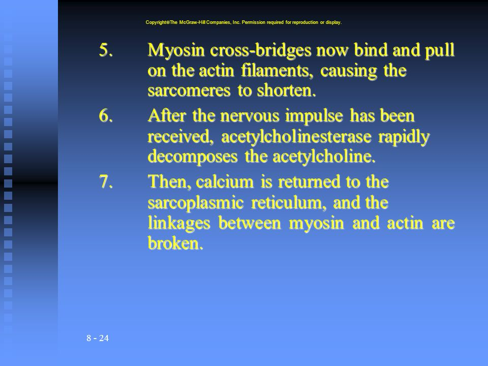 8 - 24 5.Myosin cross-bridges now bind and pull on the actin filaments, causing the sarcomeres to shorten. 6.After the nervous impulse has been receiv