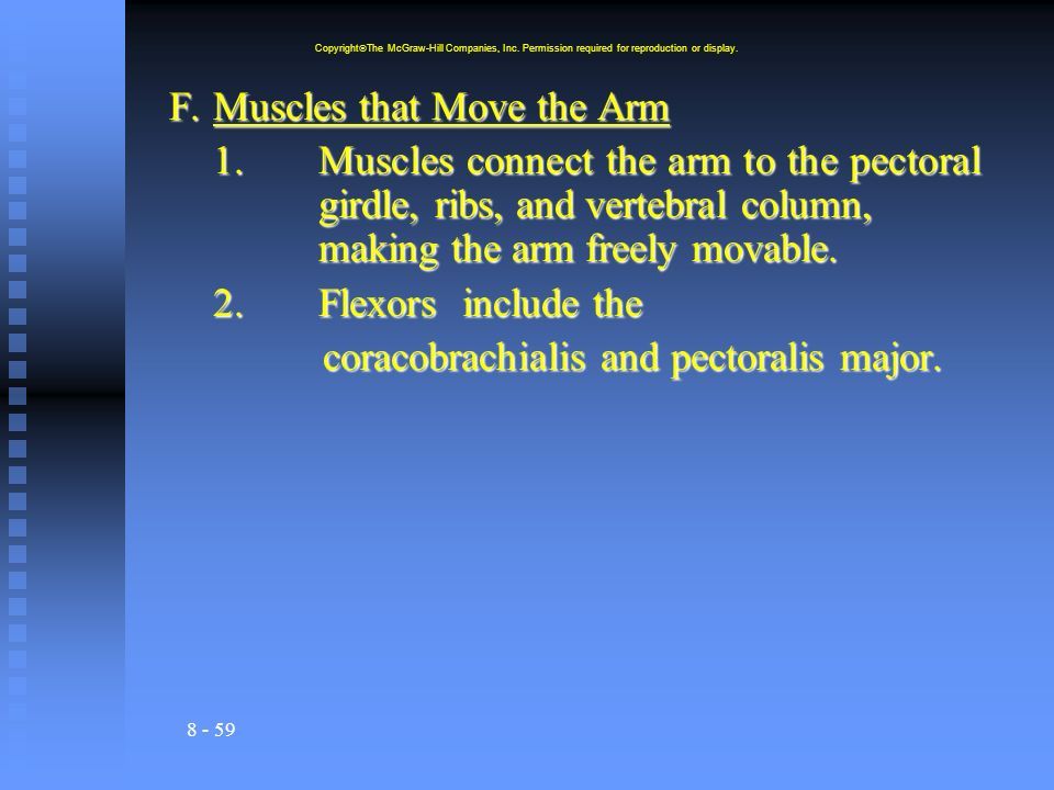 8 - 59 F.Muscles that Move the Arm 1.Muscles connect the arm to the pectoral girdle, ribs, and vertebral column, making the arm freely movable. 2.Flex