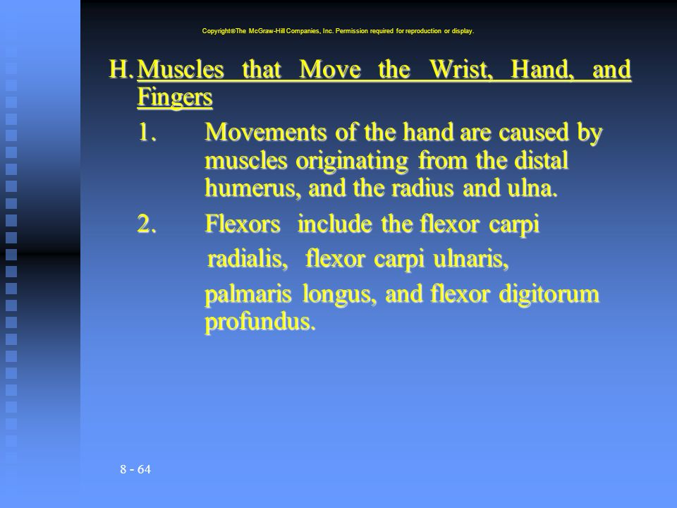8 - 64 H.Muscles that Move the Wrist, Hand, and Fingers 1.Movements of the hand are caused by muscles originating from the distal humerus, and the radius and ulna.