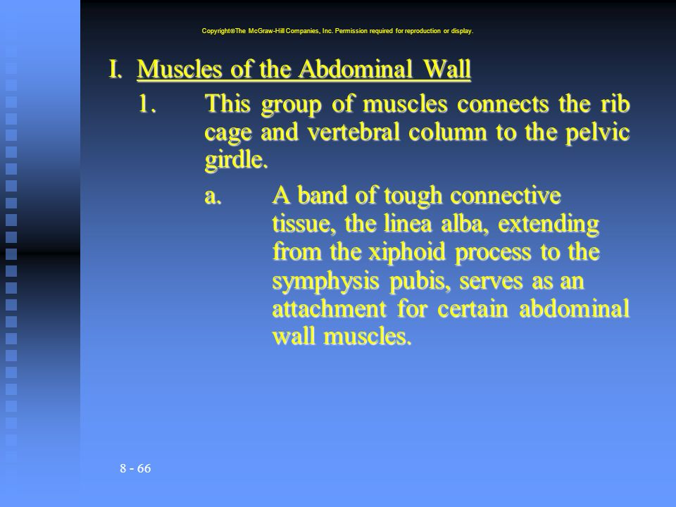 8 - 66 I.Muscles of the Abdominal Wall 1.This group of muscles connects the rib cage and vertebral column to the pelvic girdle. a.A band of tough conn