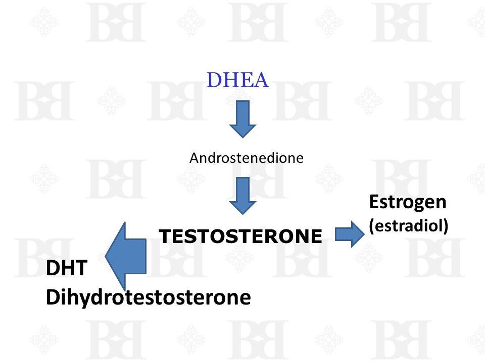 DHEA Androstenedione TESTOSTERONE Estrogen (estradiol) DHT Dihydrotestosterone