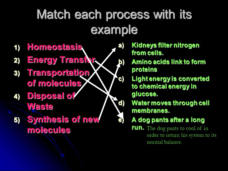 Match each process with its example 1) Homeostasis 2) Energy Transfer 3) Transportation of molecules 4) Disposal of Waste 5) Synthesis of new molecule