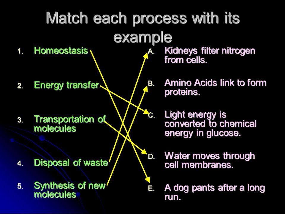 Match each process with its example 1. Homeostasis 2. Energy transfer 3. Transportation of molecules 4. Disposal of waste 5. Synthesis of new molecule