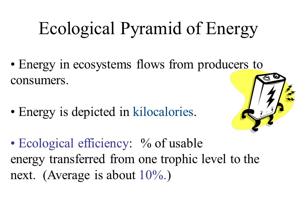 Ecological Pyramid of Energy Energy in ecosystems flows from producers to consumers. Energy is depicted in kilocalories. Ecological efficiency: % of u